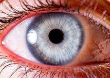 虹膜摄影 眼珠的接近的宏观射击 淡蓝和白色与浅火山口和卷须 免版税库存图片
