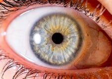 虹膜摄影 眼珠的接近的宏观射击 淡蓝或绿色和黄色与火山口 图库摄影