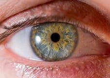 虹膜摄影 眼珠的接近的宏观射击 绿化黄色 免版税库存照片