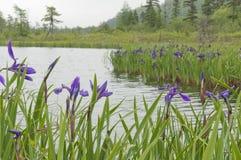 虹膜类似湖2 库存照片