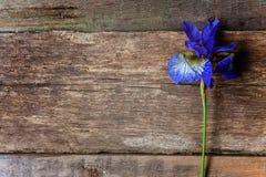 虹膜花在一张木桌上的 库存图片