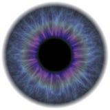 虹膜 免版税库存照片