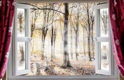 虽则有薄雾的森林地一个开窗口 免版税库存照片