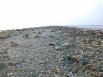 虾和海滩 免版税库存照片