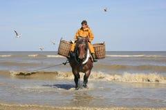 虾渔夫在马背上, Oostduinkerke,比利时 免版税图库摄影