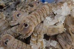 虾蛄 图库摄影
