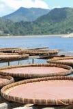 虾酱在一个渔村在香港 免版税库存照片