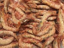 虾-大虾 库存照片