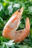 虾以绿色 一只未加工的虾在绿色荷兰芹说谎 原始的虾 宏指令 免版税库存图片