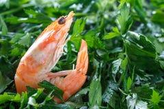 虾以绿色 一只未加工的虾在绿色荷兰芹说谎 原始的虾 宏指令 图库摄影