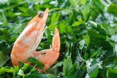 虾以绿色 一只未加工的虾在绿色荷兰芹说谎 原始的虾 宏指令 免版税库存照片