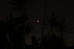 蚀月亮 库存照片