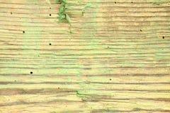 蚀船虫损坏的木头 库存图片