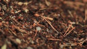 蚁丘和它的inhabitans蚂蚁 影视素材