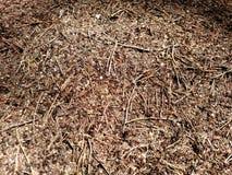 蚁丘在夏天森林里-背景的 免版税图库摄影