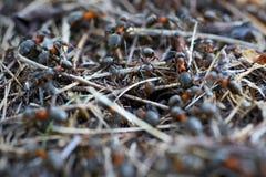 蚁丘在森林里 库存照片