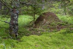 蚁丘在森林 免版税库存图片