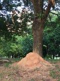 蚁丘蚂蚁殖民地 免版税库存照片