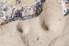 蚁狮巢 免版税库存图片
