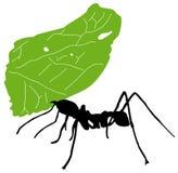 蚂蚁切割工叶子 库存照片