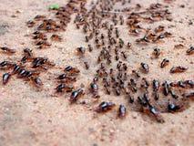 蚂蚁前进 库存图片