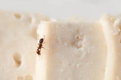 蚂蚁吃 免版税库存照片
