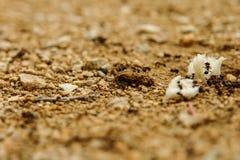 蚂蚁吃 库存照片