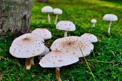 蚂蚁和蘑菇 免版税库存图片