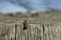 蚂蚁和uknown未来 免版税库存图片