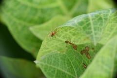 蚂蚁在庭院里 免版税库存图片