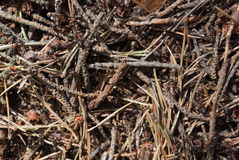 蚂蚁在森林,捷克里 库存照片