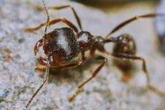 蚂蚁外面在庭院里 库存照片
