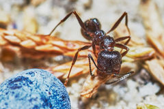 蚂蚁外面在庭院里 免版税库存照片