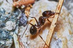 蚂蚁外面在庭院里 免版税图库摄影