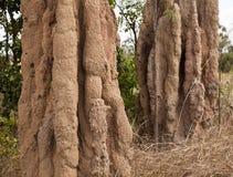 蚂蚁大小山土墩北白蚁领土 免版税库存图片