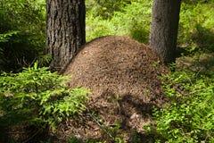 蚂蚁大小山 免版税库存图片