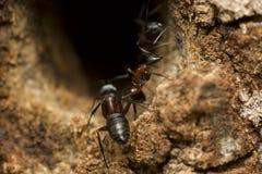 蚂蚁大森林 免版税库存照片