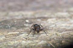 蚂蚁宏观在木桌上 库存照片