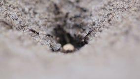 蚂蚁家庭 影视素材