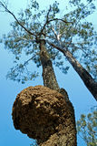 蚂蚁嵌套白色 免版税图库摄影