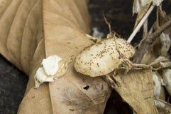 蚂蚁巢芯片吃运载动物昆虫家概念 免版税库存图片