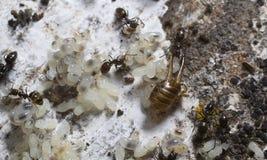 蚂蚁巢 免版税库存图片