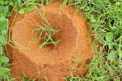 蚂蚁巢 免版税库存照片