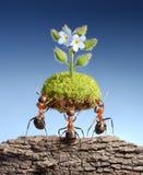 蚂蚁带来在停止的岩石的生存本质,概念 库存照片