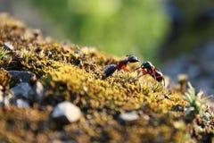 蚂蚁战斗s 库存照片
