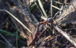蚂蚁旅行  库存照片