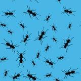 蚂蚁昆虫无缝的样式669 皇族释放例证