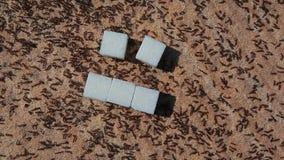 蚂蚁昆虫自然石背景 股票视频