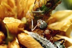 蚂蚁昆虫 库存图片