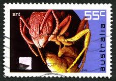 蚂蚁澳大利亚邮票 库存照片